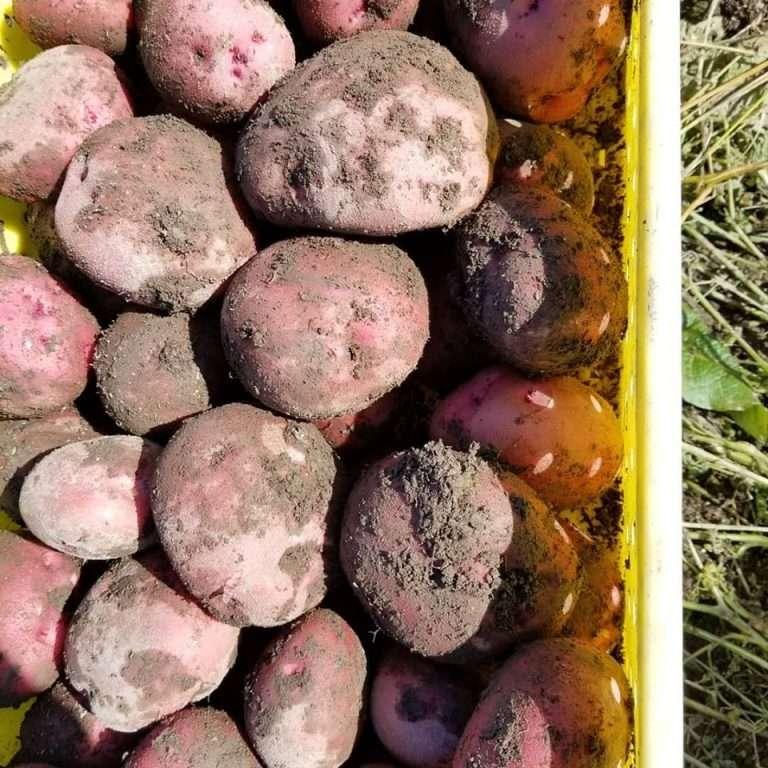 [Delta School District] Farm Roots Brings Fun to Farming!