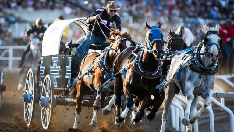 [AB] The 2019 Summer Calgary Stampede!
