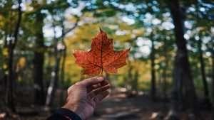 canadian_symbol